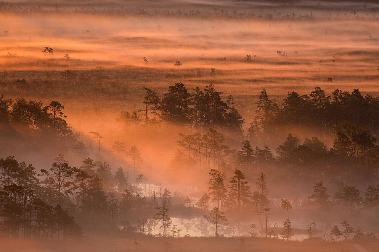 """""""Roosa hommikuudu Tolkuse rabas"""" by MKose, under CC-BY-SA-3.0-EE"""