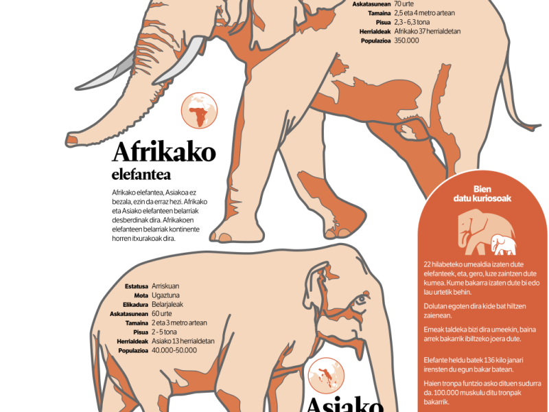 Infographic comparing the African and Asian elephants