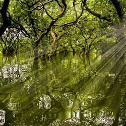 Sunlight streams through the evergreens of Ratargul Swamp Forest in Bangladesh.