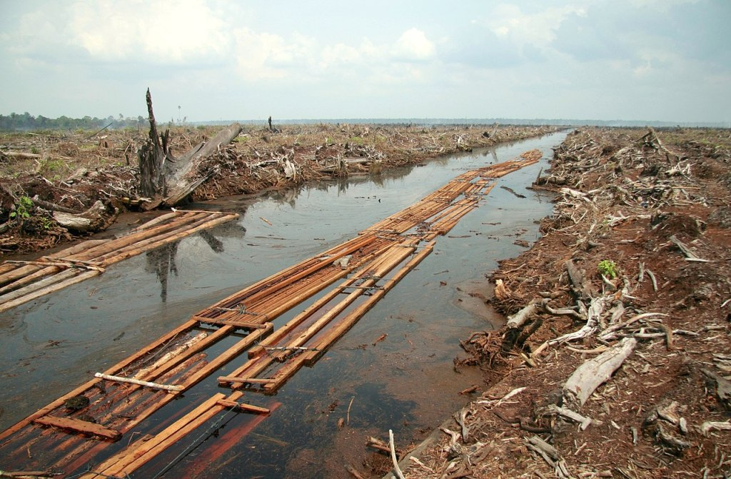 Deforestation for oil palm plantation in 2006.